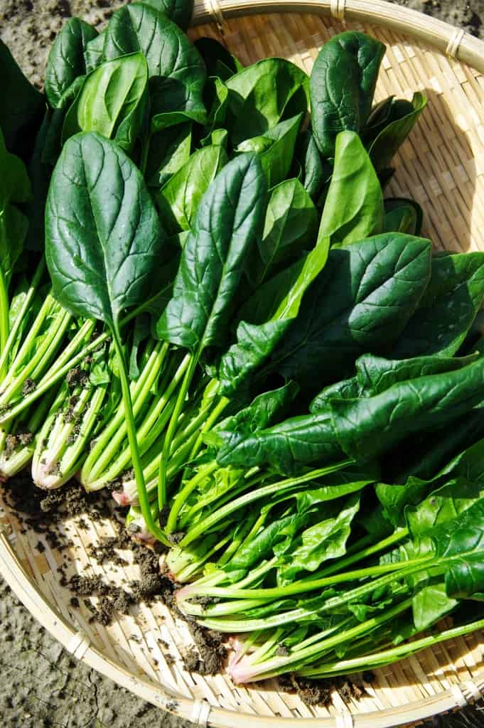 health benefits of spinach leaves